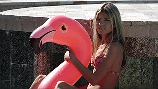 粉红色的天鹅